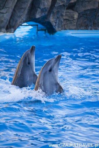 dolphinarium_batumi_5